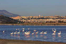 Flamingoes and Cagliari from Is Molentargius pond