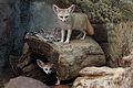 Fennec Fox Family.jpg