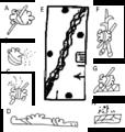 Field Topographic properties Aztec Glyphs Codex Asunción.png