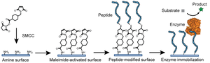 Industrial enzymes - Image: Figure 1 Example of Enzyme Immobilization by Covalent Binding