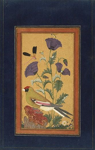 Qutb Shahi dynasty - Golkonda Painting - Finch, Poppies, Dragonfly, and Bee India (Deccan, Golconda), 1650-1670 Opaque watercolor and gold on paper Overall