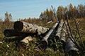 Firewood in Russia. img 21.jpg