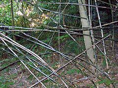 Flagellaria indica Royal National Park.jpg