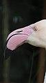 Flamingo no Parque Nacional de Foz do Iguaçu.jpg