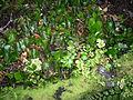 Flickr - brewbooks - Waipoua Forest (34).jpg