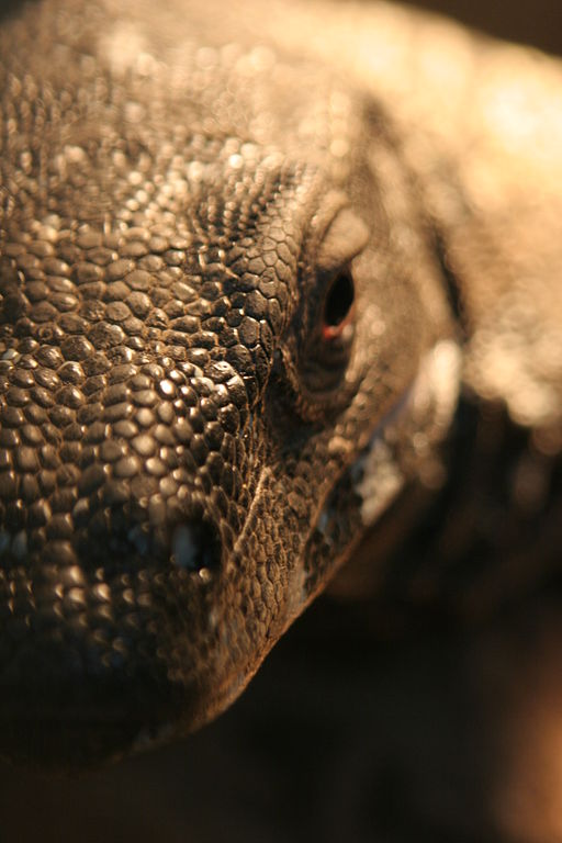 Flickr - bslmmrs - Komodo dragon