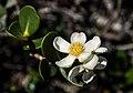 Flor típica da região - Chapada Diamantina.jpg