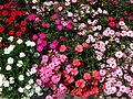 Flower-center130527.jpg