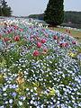 Flower-center134415.jpg