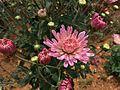 Flower110623.jpg