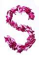 Flower Alphabet - S.jpg