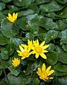 Flowers (2425723494) cropped.jpg