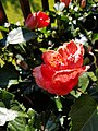 Flowers of 2019 (48125371297).jpg