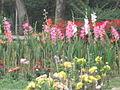 Flowers of Bangladesh32.jpg
