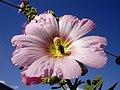 Flowers of Iran گلهای ایران 27.jpg
