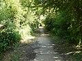 Footpath on Alderstead Heath - geograph.org.uk - 1387400.jpg