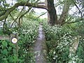 Footpath to Kingsbridge by Padbury Brook - geograph.org.uk - 449563.jpg