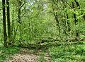 Forest - panoramio - paulnasca (107).jpg