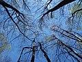 Forest 934.jpg