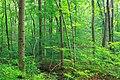 Forest Buffer (20613873778).jpg