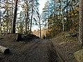 Forest around Ravalen Lake.jpg