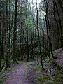 Forest track above Loch Shiel - geograph.org.uk - 523631.jpg