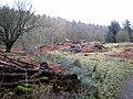 Forestry near Simonburn Castle - geograph.org.uk - 674170.jpg