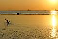 France-001156 - Seagull at play.... (15203774851).jpg