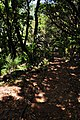 From Rabacal to Levada do Risco ^ Levada 25 Fontes, Madeira, Portugal, June-July 2011 - panoramio (1).jpg