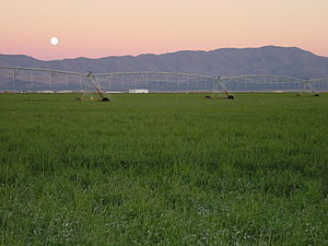 Diamond Valley - Valley in early summer: with Timothy grass hay, full moon, and the Diamond Mountains.