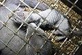 Fur Farming IMG 0009 (10983046983).jpg