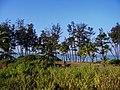 GOA Betalbatim beach - panoramio (2).jpg