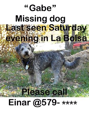 Animal loss - Typical posting for lost pet