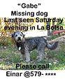 Gabe, missing dog.jpg
