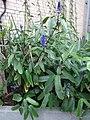 Garden Court - US Botanic Gardens 51.jpg