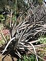 Gardenology-IMG 5354 hunt10mar.jpg