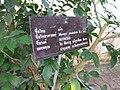 Gardenology.org-IMG 7711 qsbg11mar.jpg