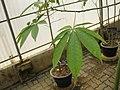 Gardenology.org-IMG 7979 qsbg11mar.jpg