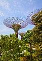 Gardens by the Bay - panoramio (2).jpg
