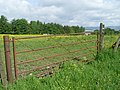 Gate at field east of Bishopbriggs - geograph.org.uk - 1336494.jpg