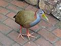 Giant Wood Rail SMTC.jpg
