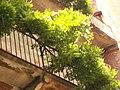 Giardino botanico di Brera (Milan) 183.jpg