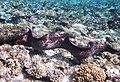 Gigantische Muräne im Roten Meer..DSCF3621BE.jpg