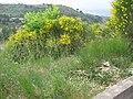 Ginestre - panoramio.jpg