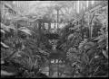 Glasshouse fernery at Dunedin Botanic Garden ATLIB 313968.png