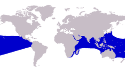 Gnathanodon speciosus distribution.png