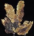 Gold (Breckenridge, Colorado, USA) 1 (16850580819).jpg