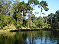 Golden Gate Park 02.JPG