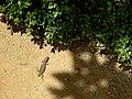 Granada-Day2-31 (48004376057).jpg