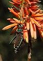 Grasshopper 2017 07 02 0382.jpg